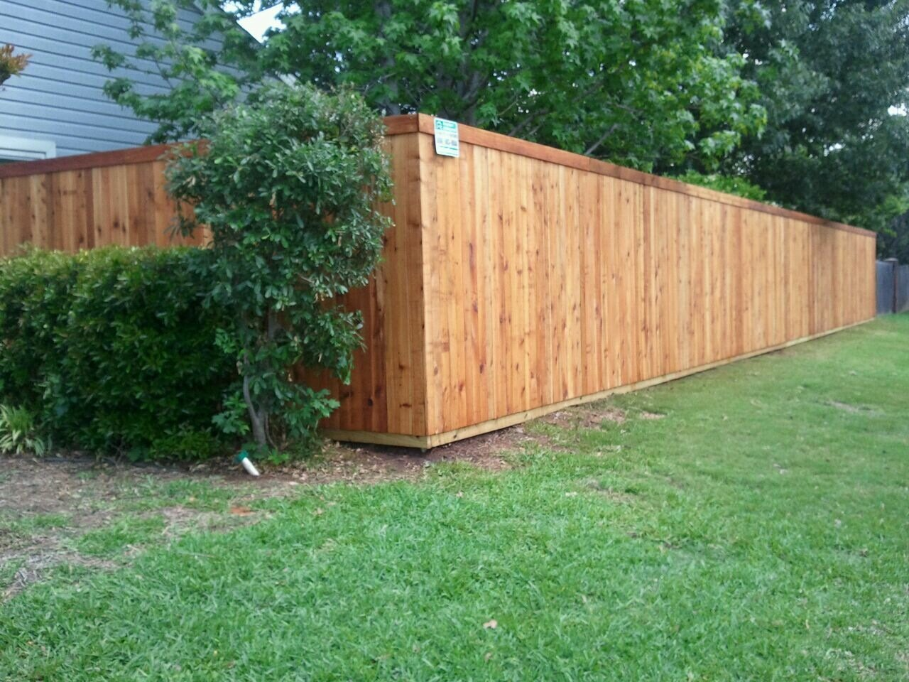 Clear Coated and Stained Cedar Fence - Fencing